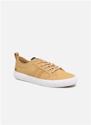 Sneakers Filmore by Globe